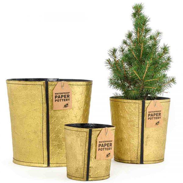 Gold Christmas paper pots